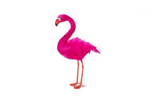 Flamingo stehend Sunshine State Hot Berry