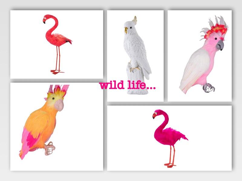 Wild Life Januar 2020